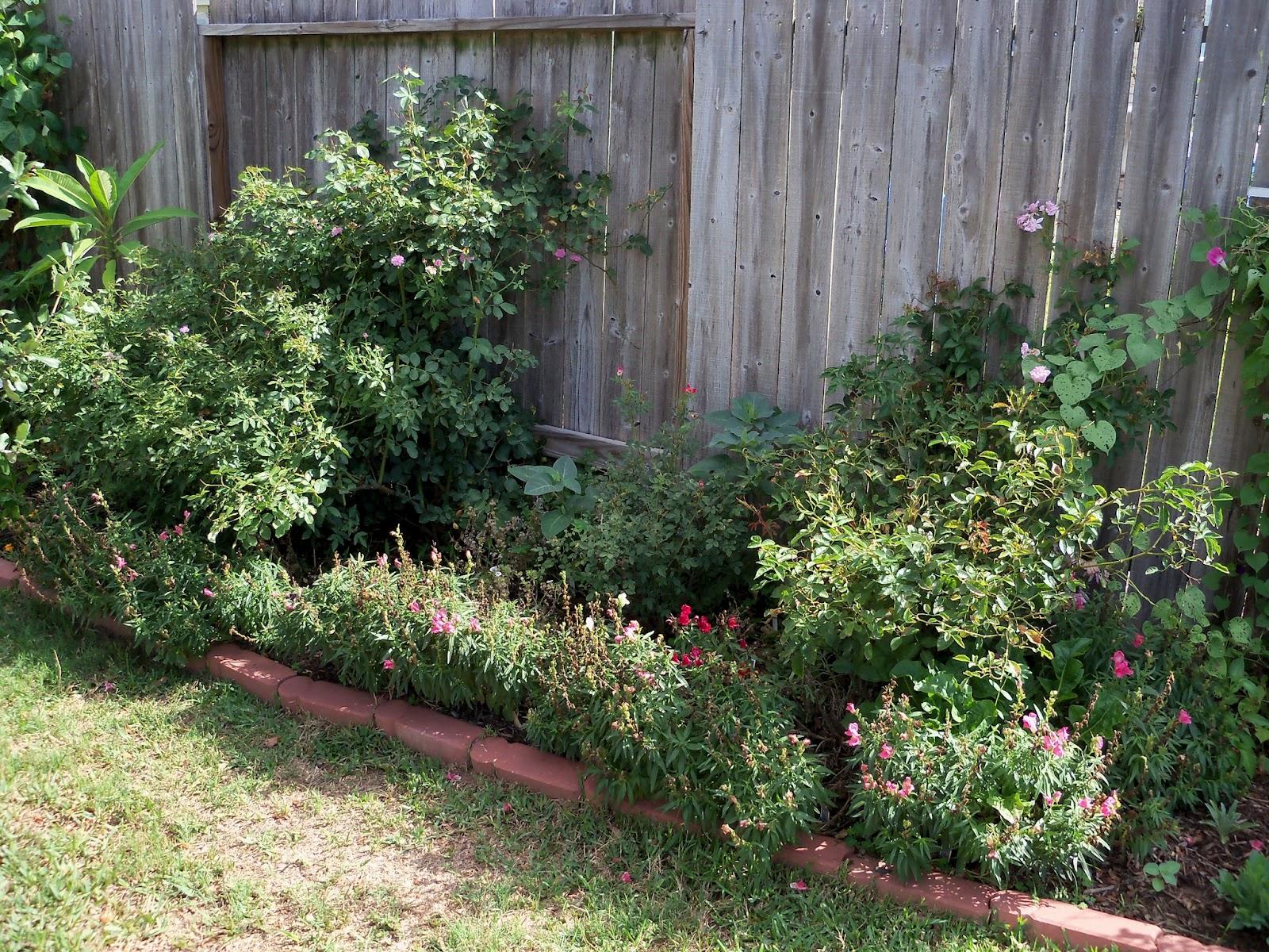 Gardening 2011 - 100_9939.JPG