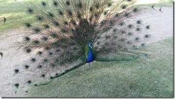 pavao-fauna-e-flora