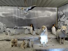 2015.12.07-020 pingouins