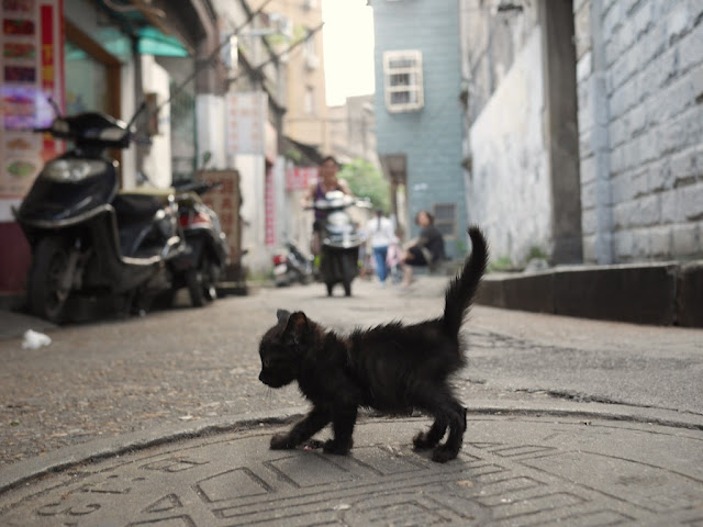 tiny black kitten crossing an alley in Changsha, Hunan, China