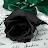 Snow Paw avatar image