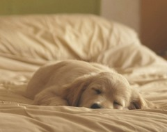 Cute-Dog-05 (4)