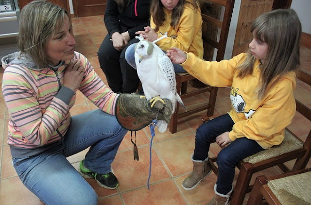 Falcó Zoo del Pirineu.jpg