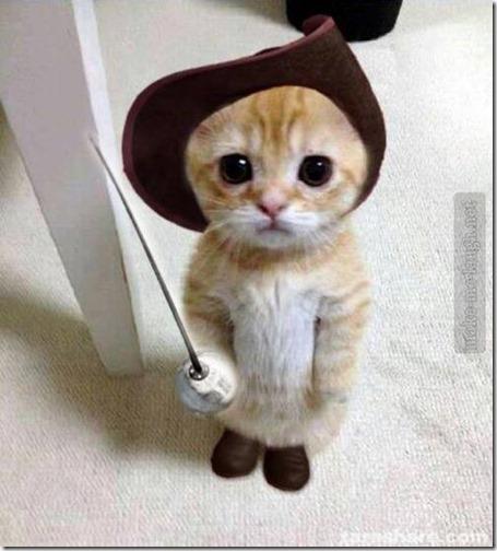 humor gatos (2)