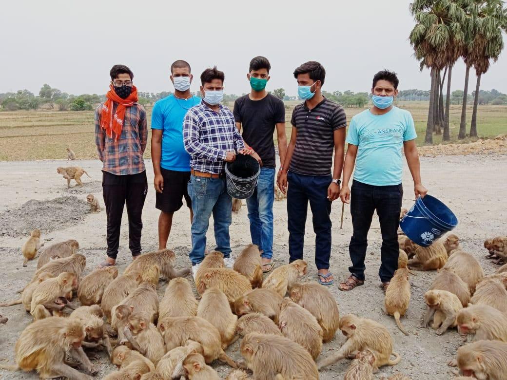मानवता की मिसाल: युवाओं ने भूखे बंदरों को खिलाया खाना
