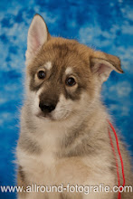 Huisdierreportage Hondendag Uden Dierendag (4 oktober 2008) - 25