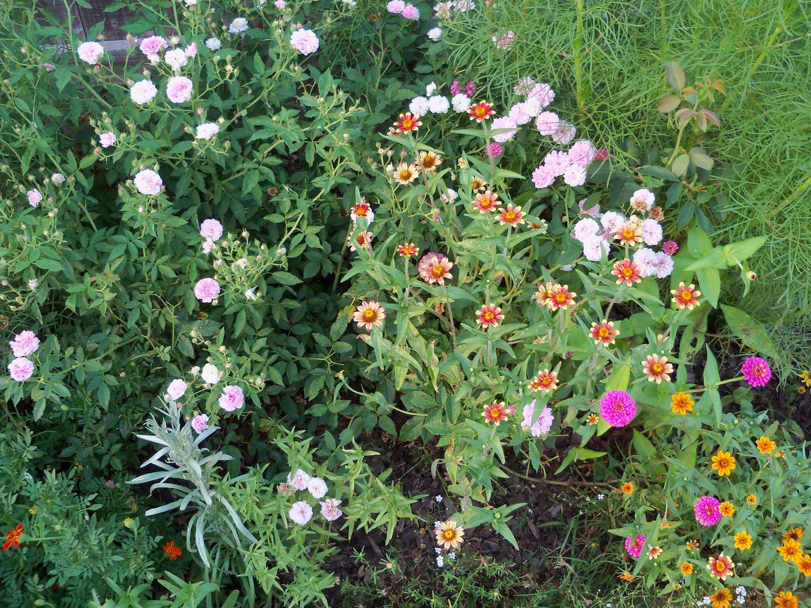 Gardening 2010, Part Three - 101_4307.JPG