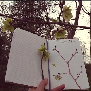 Elm drawing and Elm tree :: www.AliceDrawsTheLine.co.uk