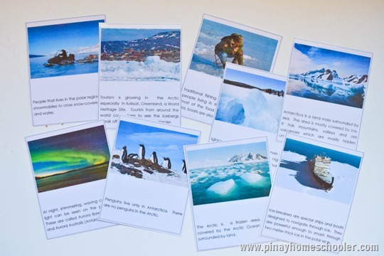 Arctic and Antarctic Mini Unit Activities