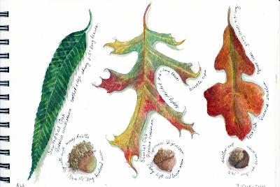 John C. Campbell Folk School Oak Leaves
