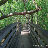 04-04-12 Hillsborough River State Park - IMGP9671.JPG