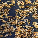 Опавшие листья на льду