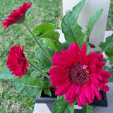 Gardening 2010 - 101_1014.JPG