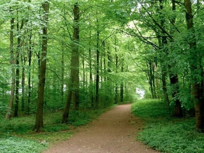 [woods.jpg%5B3%5D]