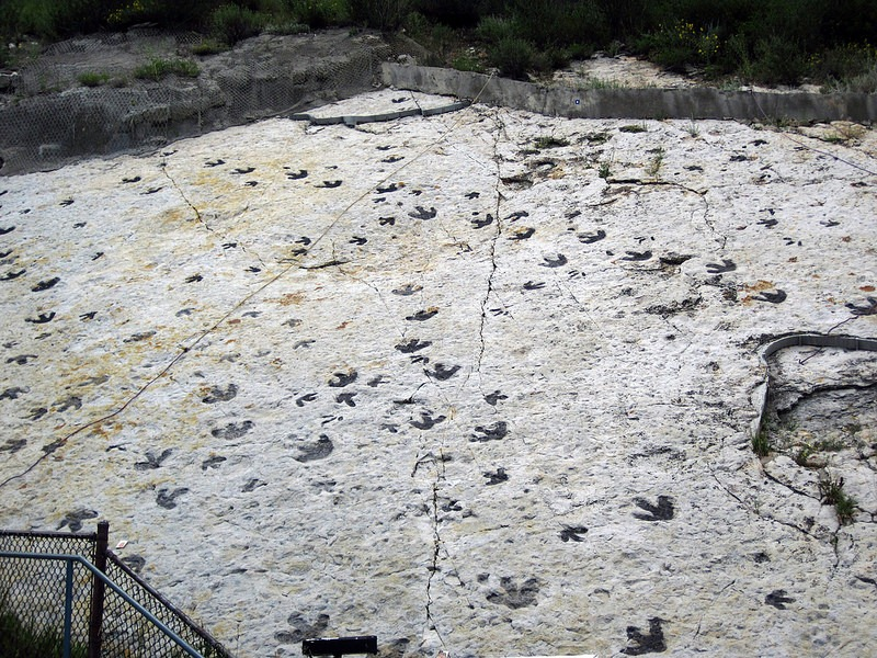 Sauropod Tracks The Dinosaur Ridge in ...