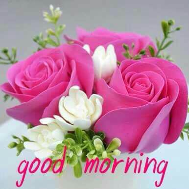 Beautiful Good Morning Images Whatsapp Images