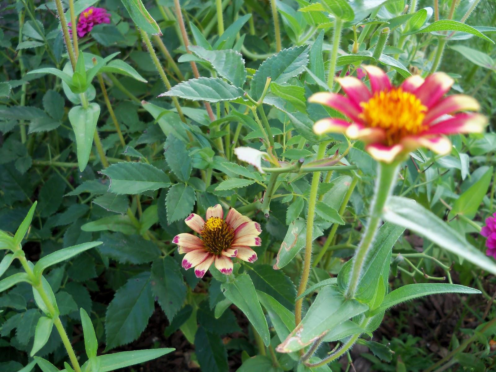 Gardening 2010, Part Three - 101_3704.JPG