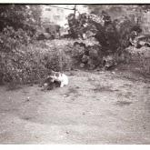n010-021-1966-tabor-sikfokut.jpg
