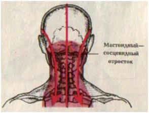 мастоидный – сосцевидный отросток
