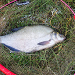 20140624_Fishing_BasivKut_004.jpg