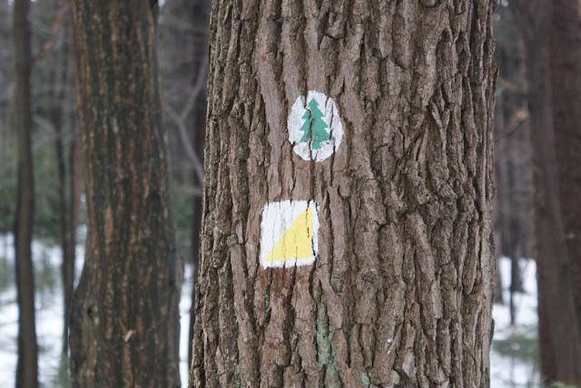 Zajęcia terenowe 29 lutego 2012 - DSC06189_1.JPG