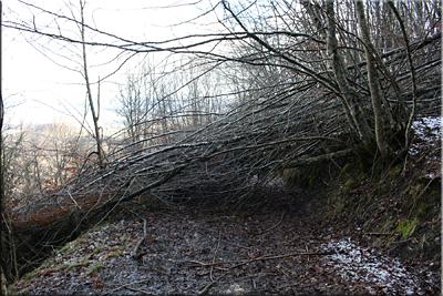 Árboles caidos en el camino