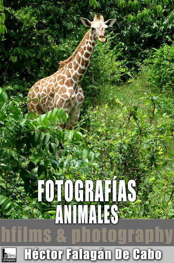 Fotografías de Animales