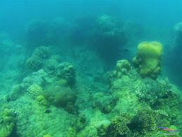 Pulau Harapan, 16-17 Mei 2015 GoPro  02