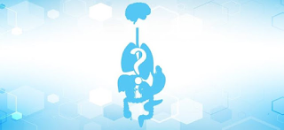 Guess the Body Part Quiz - Video Quiz Hero