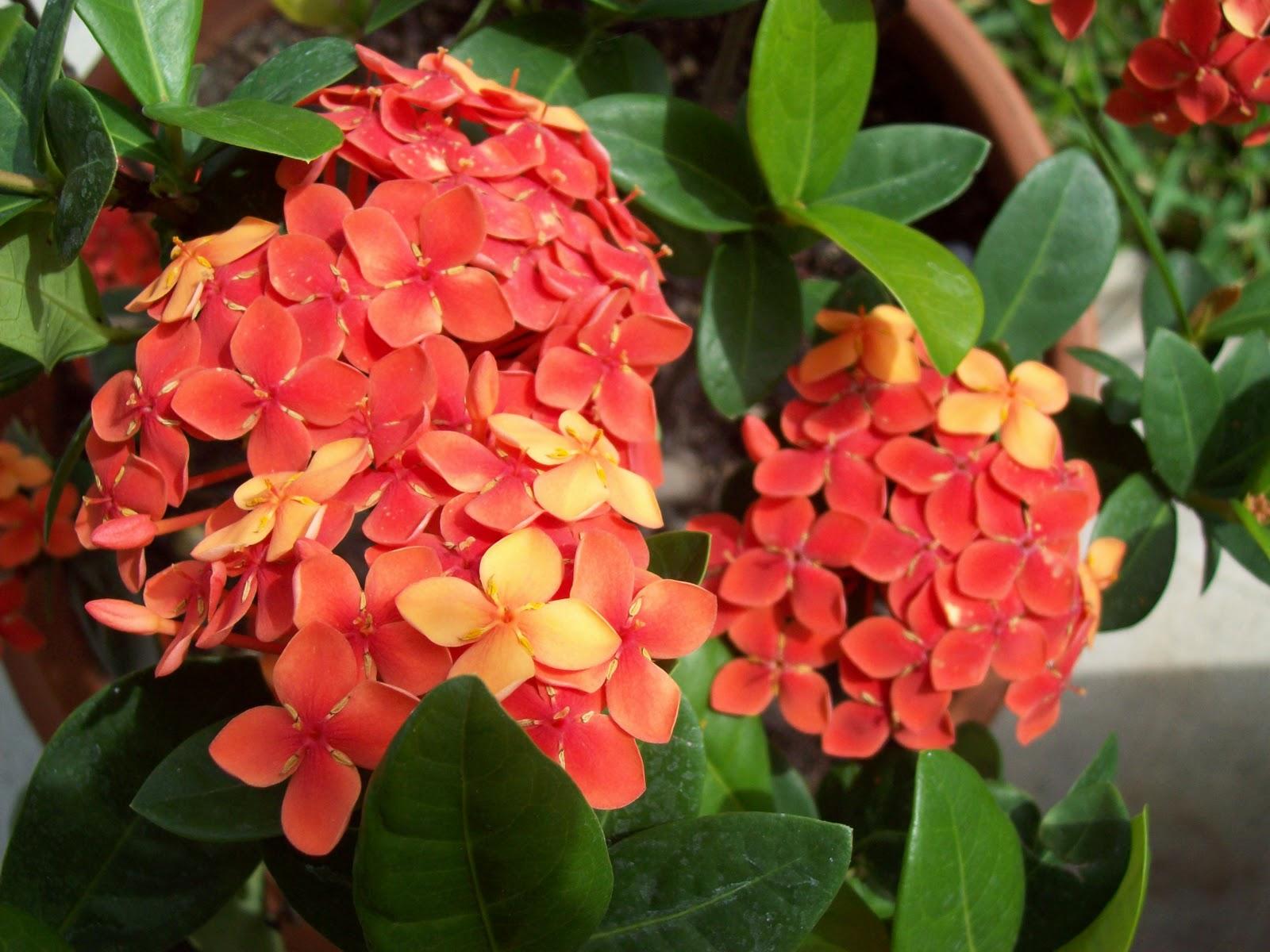 Gardening 2009 - 101_4462.JPG
