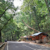 Pohon Lapuk di Jalan Palabuhanratu - Cisolok Dikhawatirkan Tumbang Memakan Korban