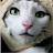 Pie what avatar image