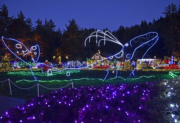 Shore Acres Lights2