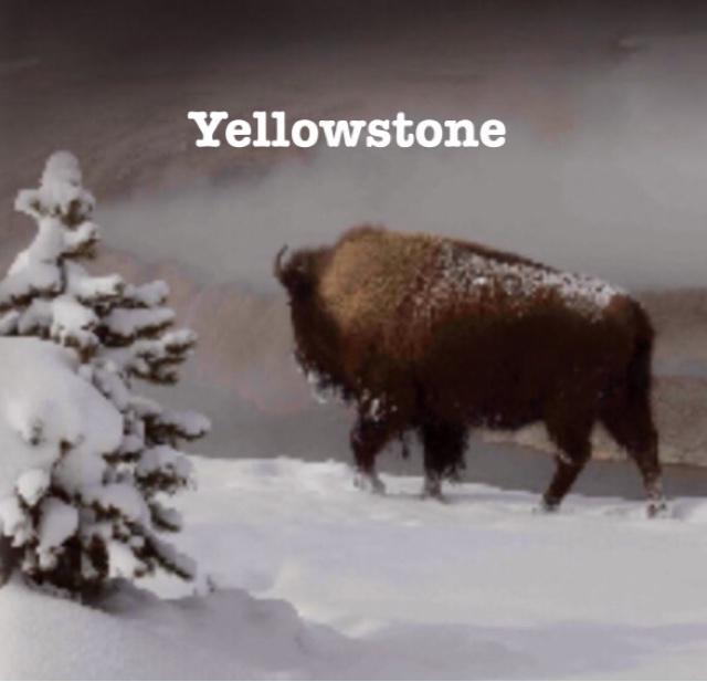 Yellowstone Netflix