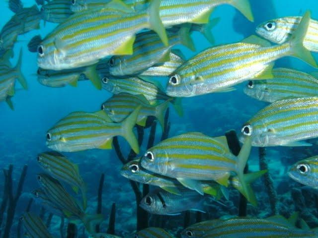 Bonaire 2011 - PICT0220.JPG