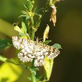 Geometridae : Ennominae : Chiasmia clathrata (LINNAEUS, 1758). Les Hautes-Lisières (Rouvres, 28), 29 juin 2011. Photo : J.-M. Gayman