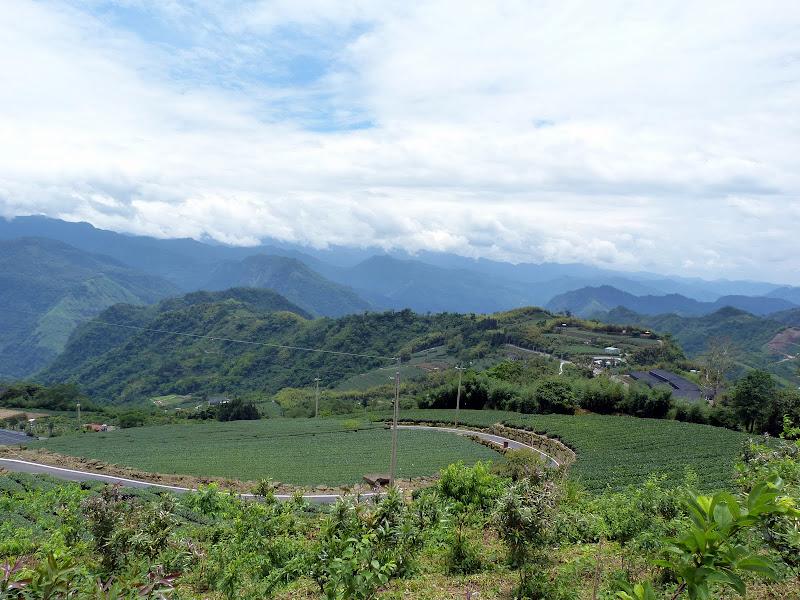 TAIWAN  Dans la region d ALISHAN - P1130883.JPG