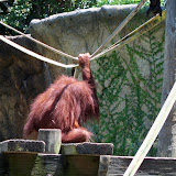 Houston Zoo - 116_8482.JPG