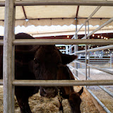 Fort Bend County Fair 2014 - 116_4208.JPG