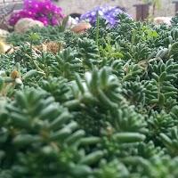 primavera-luminasioIMAG0226.jpg