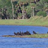 04-06-12 Myaka River State Park - IMGP9918.JPG