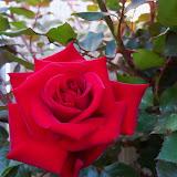 Gardening 2013 - 115_5394.JPG