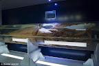 Calamar Gigante hembra