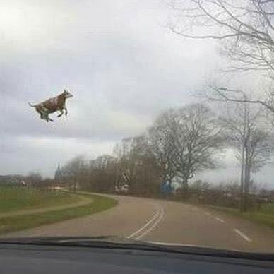 Що насправді було на всім відомій листівці-мемі з коровою у повітрі. Відповідь всередині.