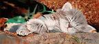 On ne réveille pas un chat qui dort 45 x 25  Novembre 2004