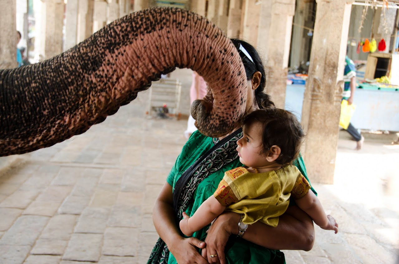 Elephant blessing at Adi Kumbeswara