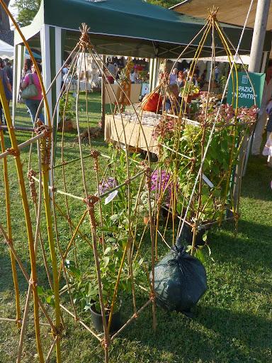 Sostegni sostegno e supporti per piccole piante rampicanti for Piante piccole da giardino