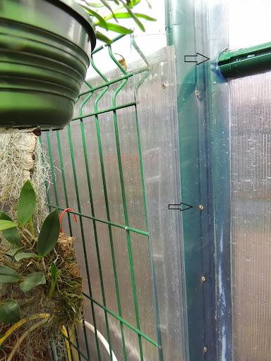 Lamentable armoire à orchidées DSCN1208