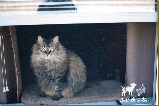 Matilda at screen WW April 11th - 2 (©Bell Fur Zoo)