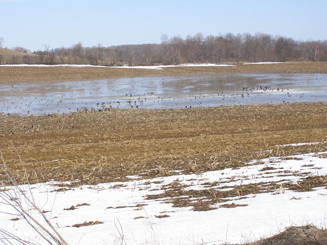 A flooded field in March